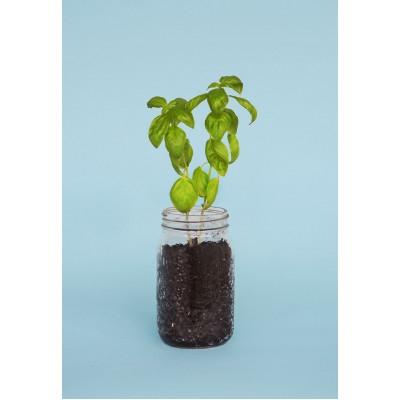 Organic Seed Box Tomato & Basil